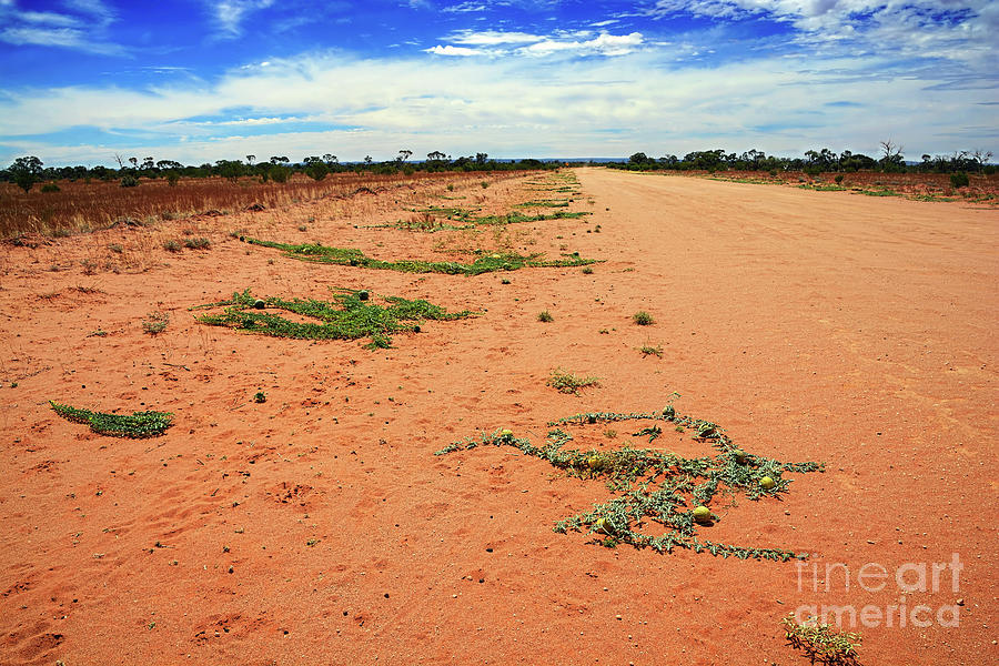 Outback Australia Desert Citron Melon By Kaye Menner Photograph