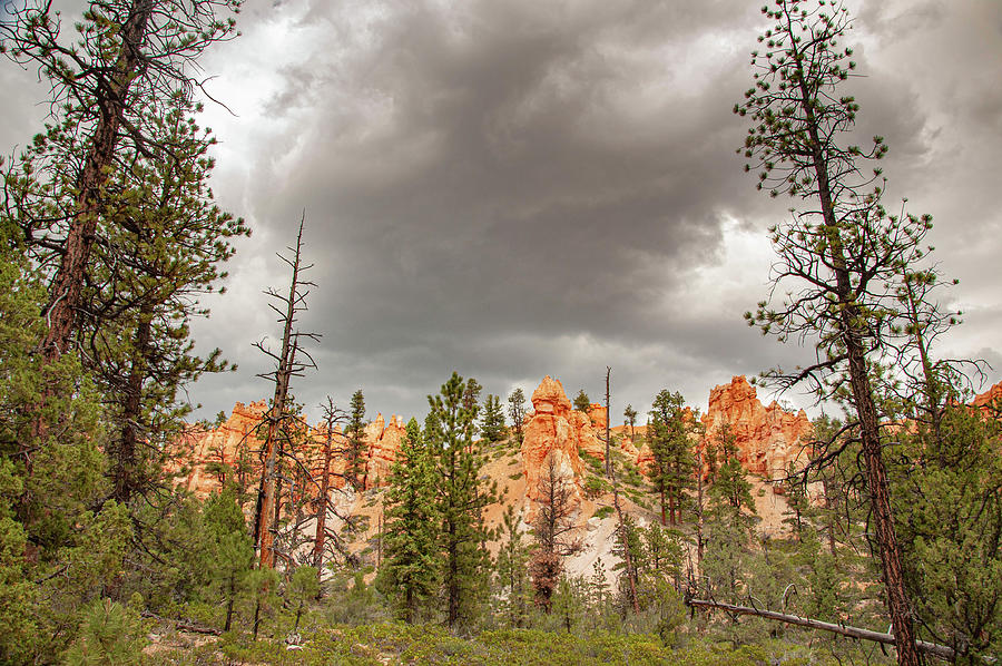 Bryce Canyon Photograph - Overcast Bryce by Rob Hemphill