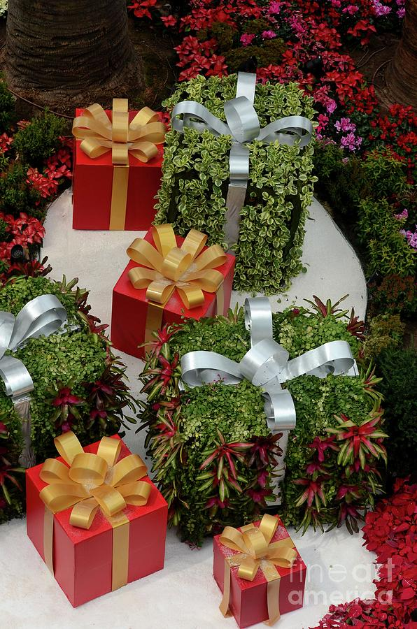 Oversize Christmas gifts with ribbons some wrapped in green plants by Imran Ahmed