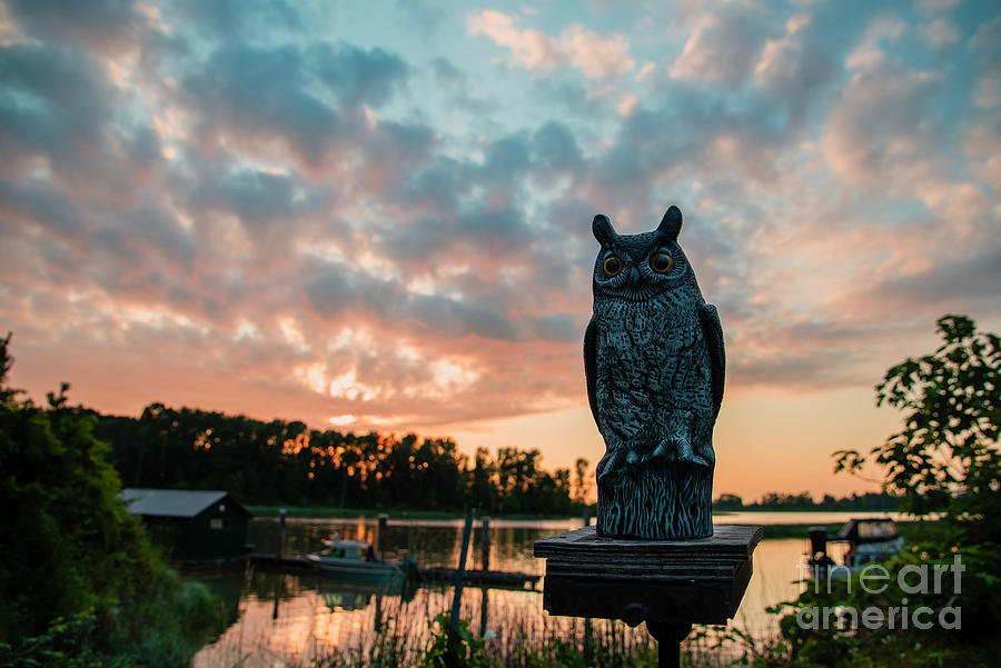 Owl Sculpture Photograph