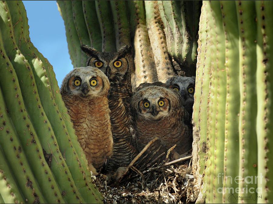 Owl Family in Saguaro Nest by Joanne West