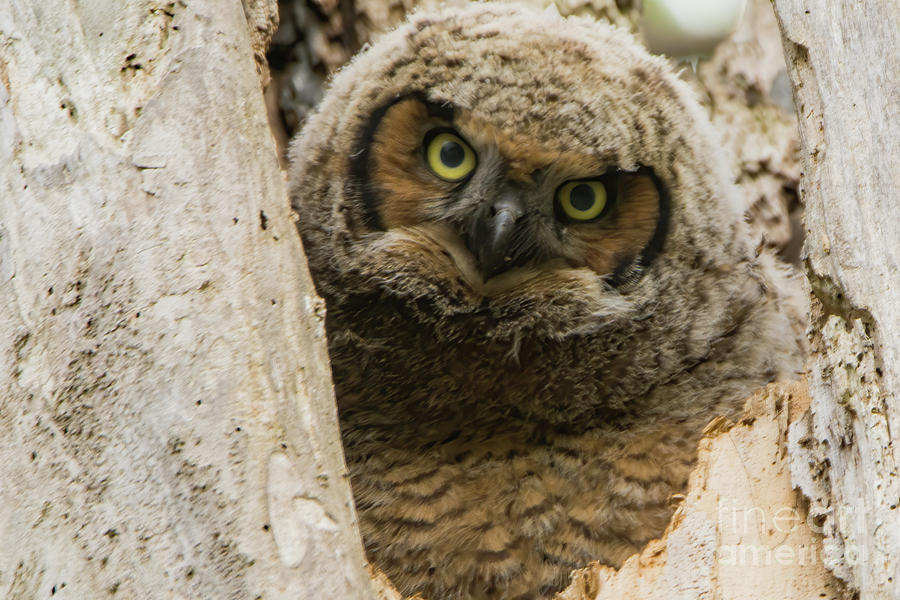 Owl Photograph - Owl by Gaby Swanson