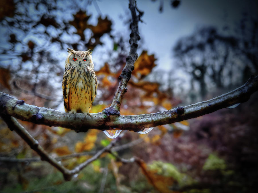 Owl on Branch by Alison Frank
