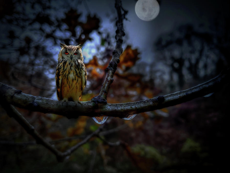 Owl on Branch at Night by Alison Frank