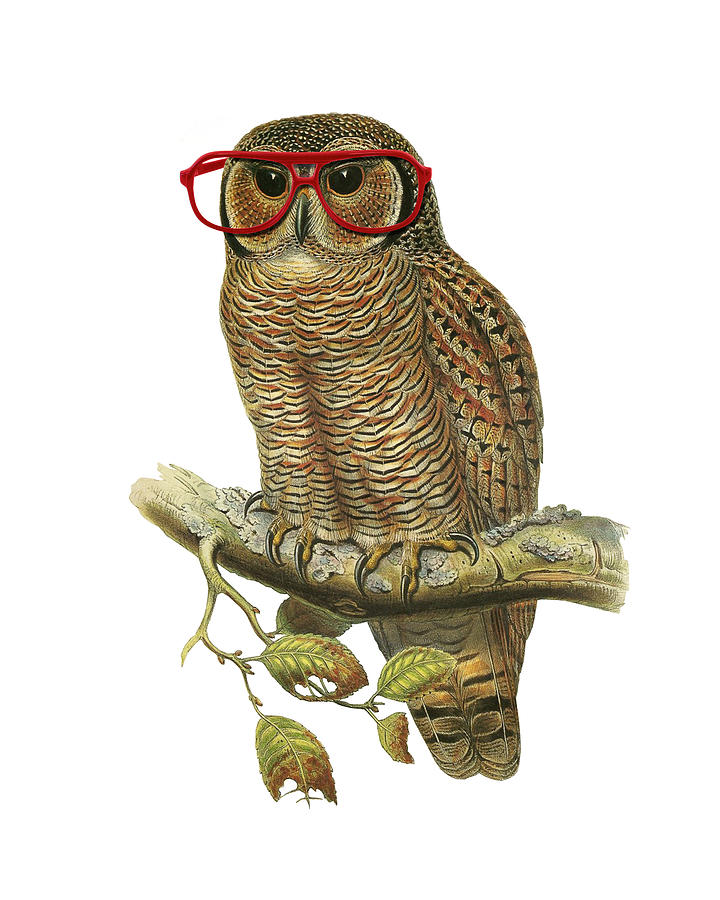 Owl Digital Art - Owl with red glasses by Madame Memento