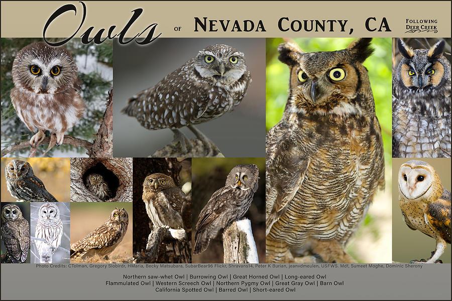 Owl Digital Art - Owls Of Nevada County California by Lisa Redfern