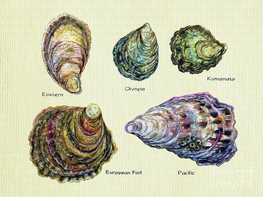 Oyster Types Textured Painting