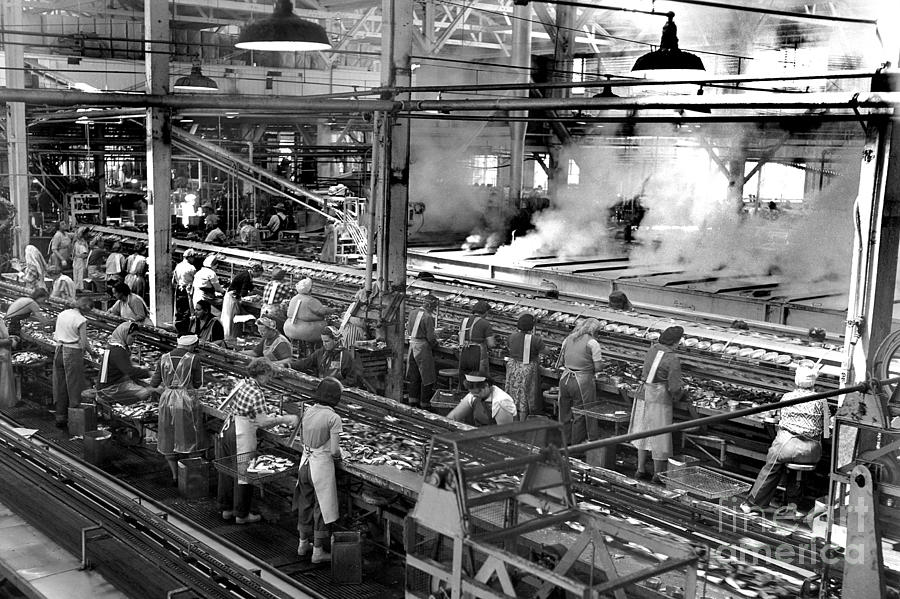 Packing oval sardine cans at the Del Monte Packing Co. Plant 101 by California Views Archives Mr Pat Hathaway Archives