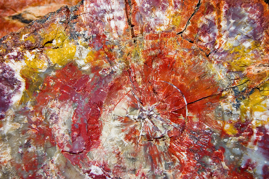 Painted Desert Wood 1 Photograph by Skip Hunt
