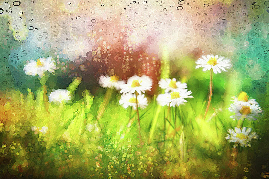 Painterly Daisies Dancing In The Rain Photograph