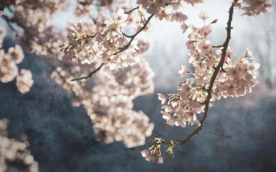 Blossom Photograph - Painterly spring blossom by Rob Visser