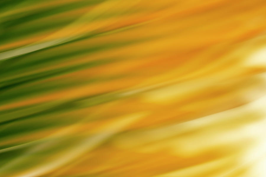 Palm Frond Abstract by Christopher Johnson