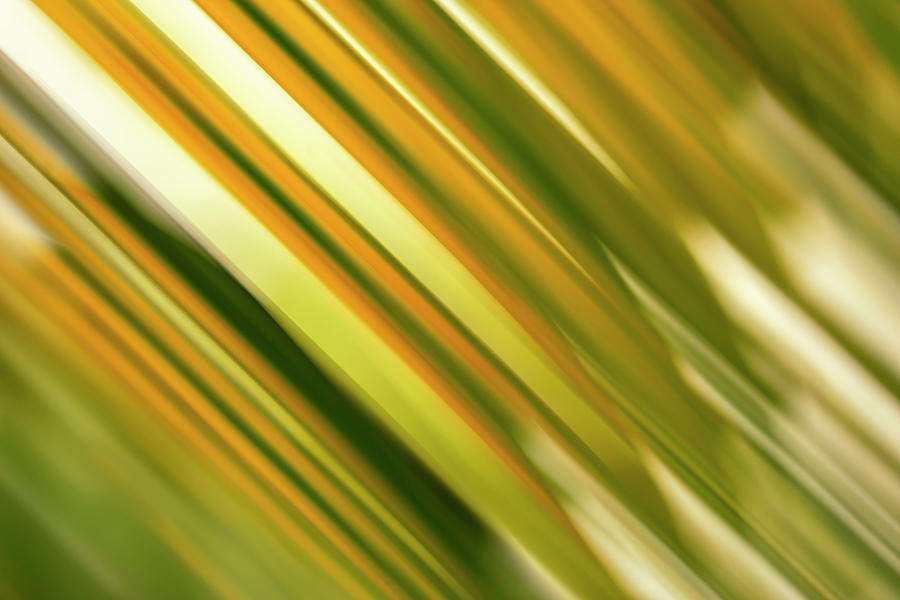 Palm Frond Motion Blur by Christopher Johnson