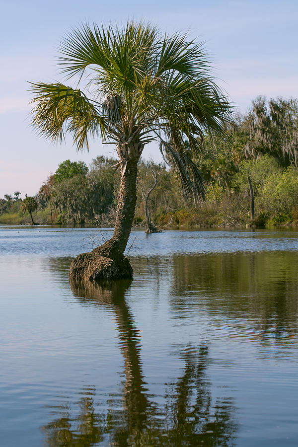 Palm growing in the lake by Zina Stromberg