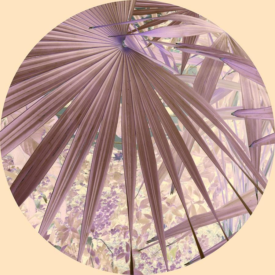 Palm  Leaf Fan Photograph