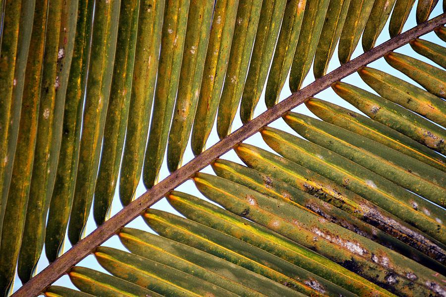Palm Leaf by Thomas Schroeder