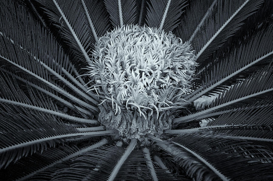 Palm Plant by Tom Singleton