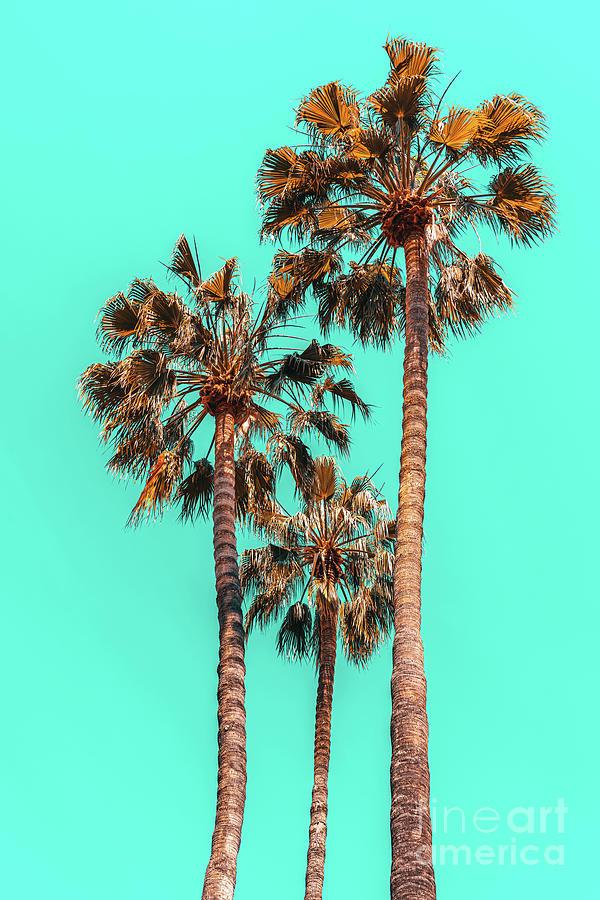 Palm Spring Trees, Breezy Palm, California Laguna Beach, Sunny California Palm Tree Leaves Photograph