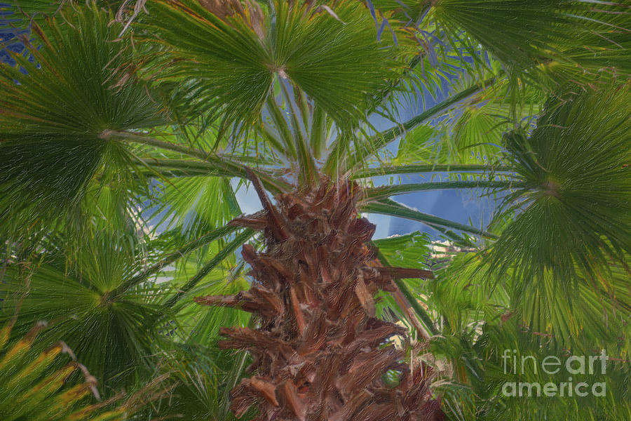Palm Stretching To The Heavens Painting