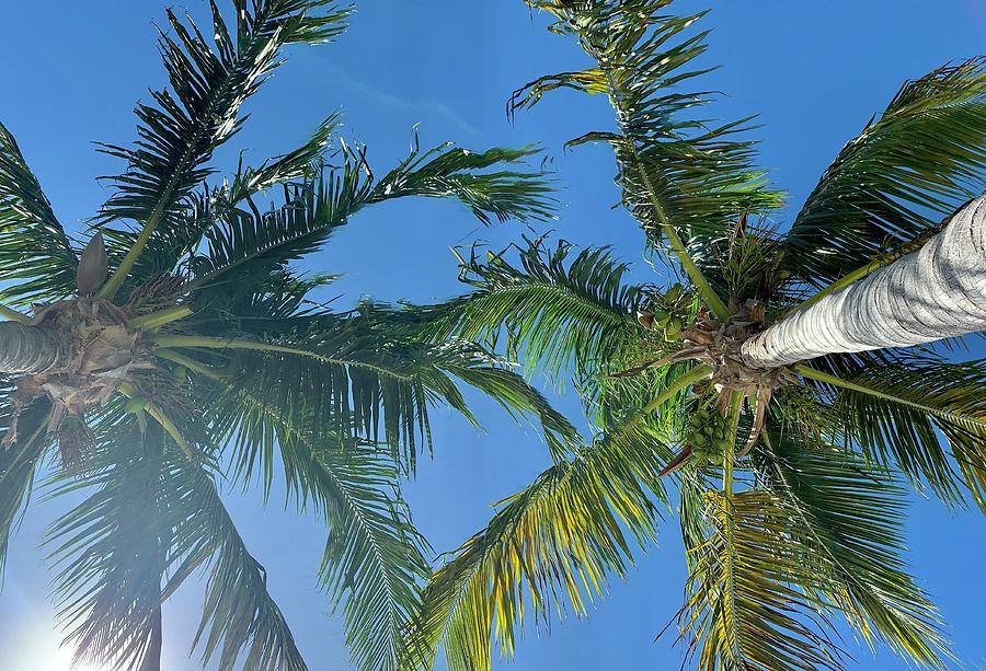 Palm Trees in Paradise by Keith Smith