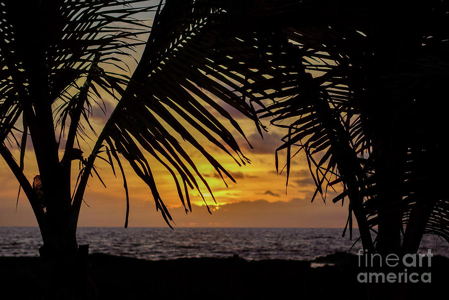 Palm Trees Silhouette With Golden Sunset Photograph