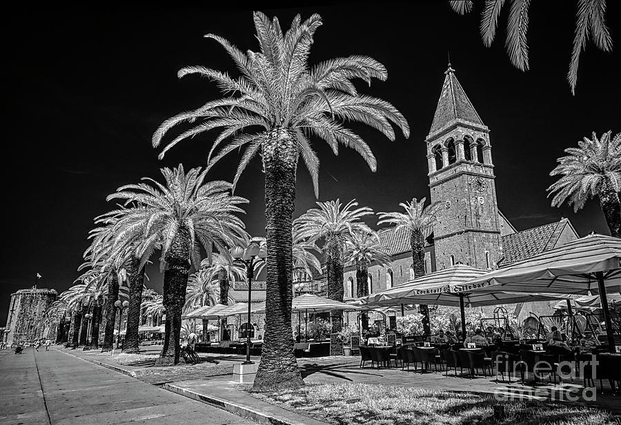 Palms Along Trogir Promenade Photograph