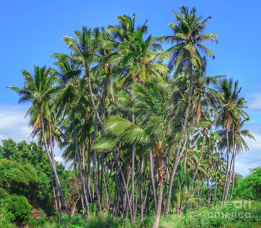 Palms In The Wind Photograph