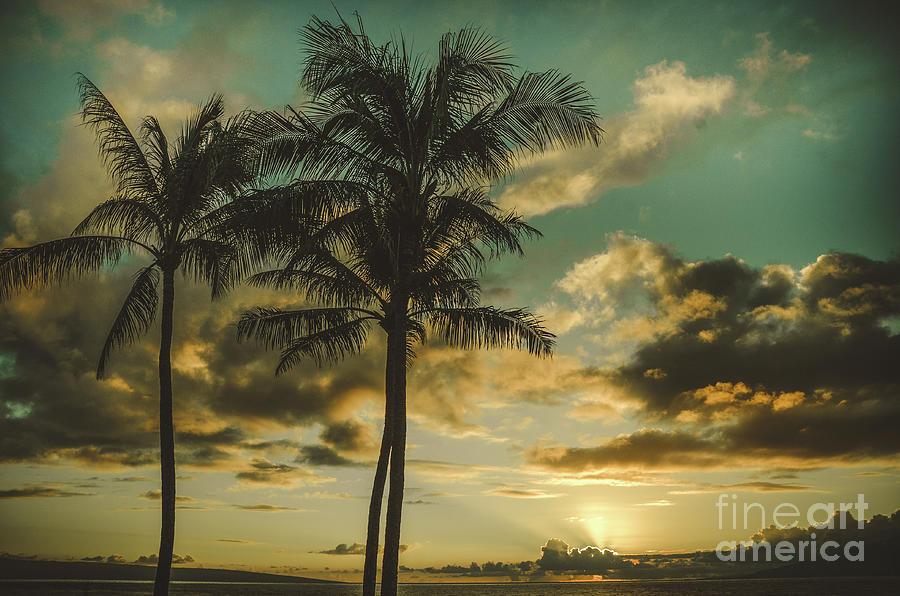 Palms Of Kapalua Photograph