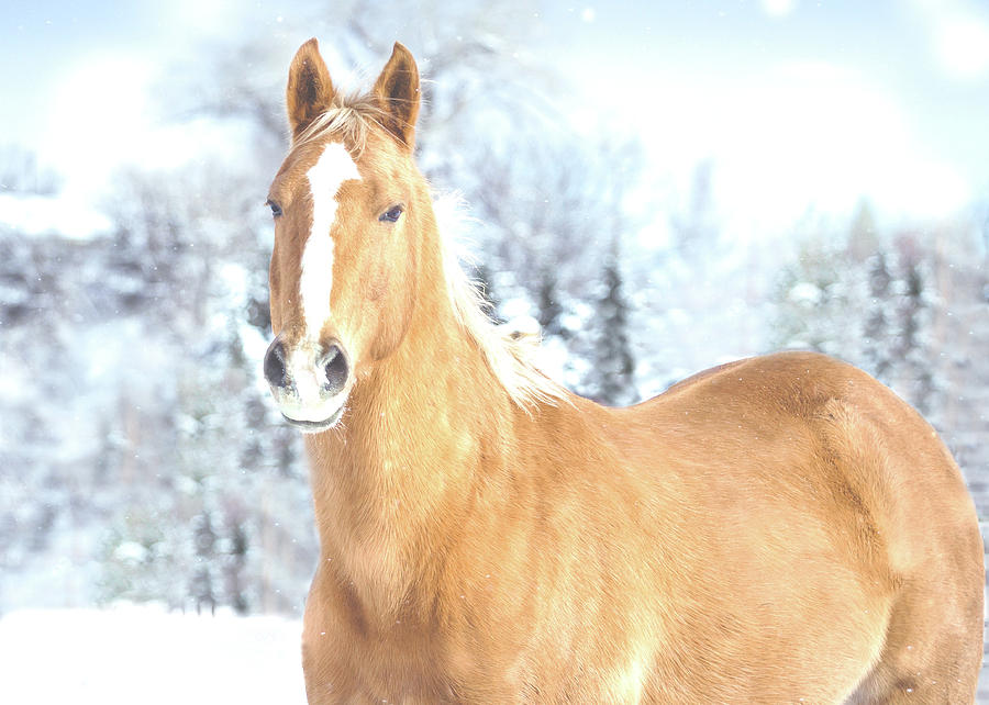 Palomino Horse in the Winter Snow by Anett Mindermann