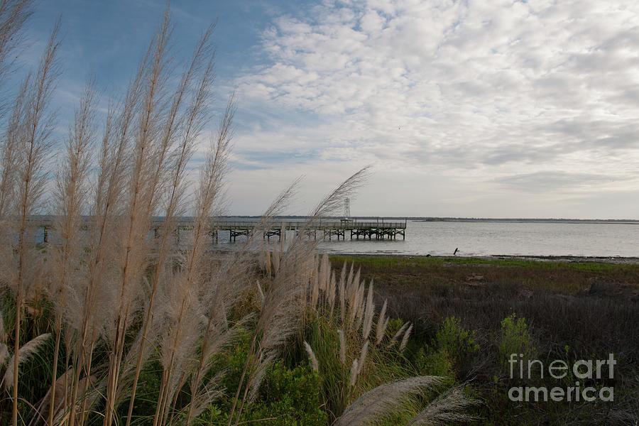 Pampas Grass Coastal Sea Breeze - Charleston Sc Photograph