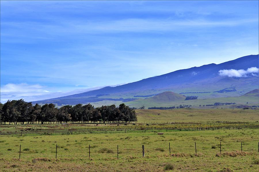 Paniolo Country Waimea Hawaii Photograph