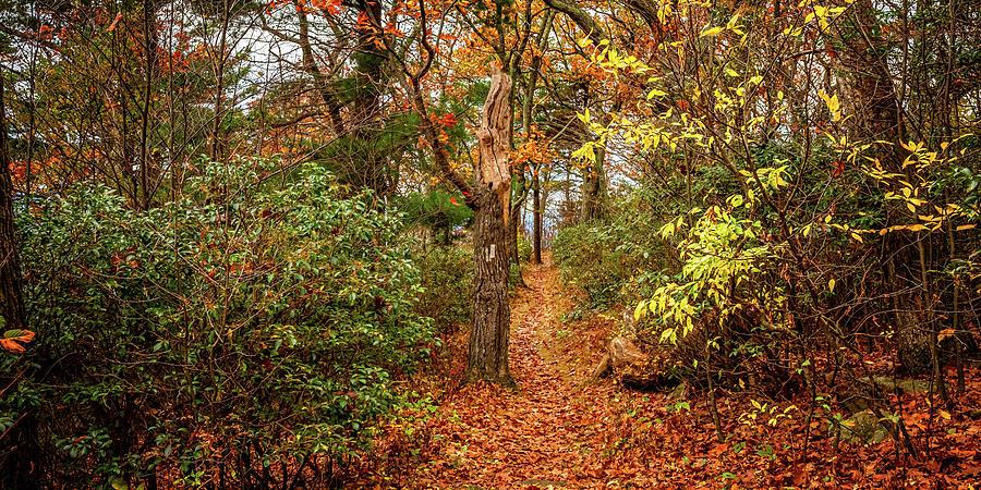 2to1 Pano - Appalachian Trail In Shenandoah National Park Photograph