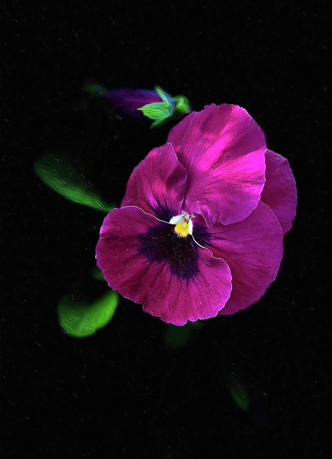 Pansies Of Spring Photograph