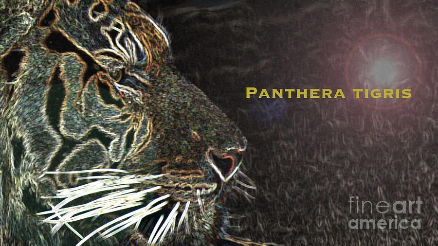 Panthera Tigris Photograph