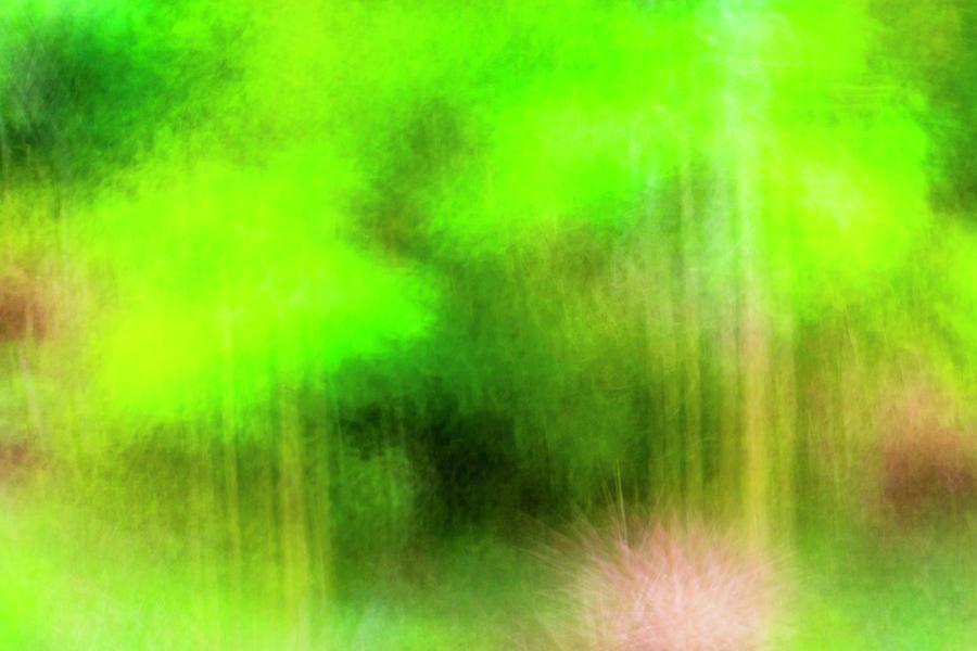 Papaya Tree Green Impressions Photograph