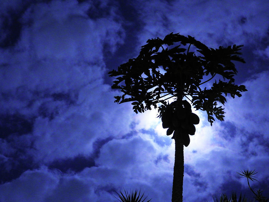Papayas Acquiring Magical Powers From The Moon Photograph