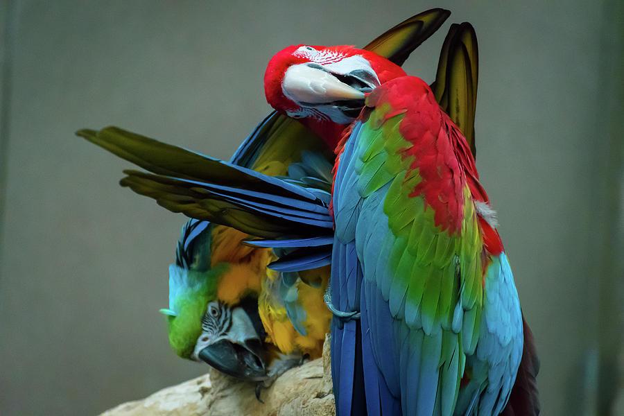 Parrots Funny Photograph