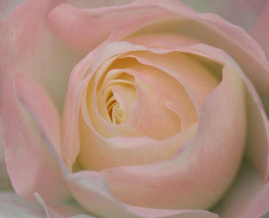 Pastel Beauty by The Art Of Marilyn Ridoutt-Greene