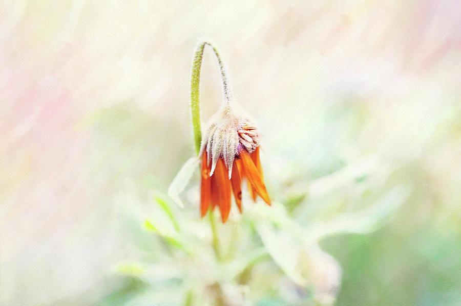 pastel flower by Sue Collura