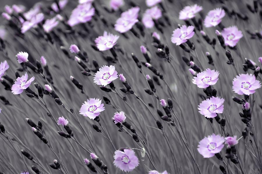 Pastel Lilac Wildflowers Painting