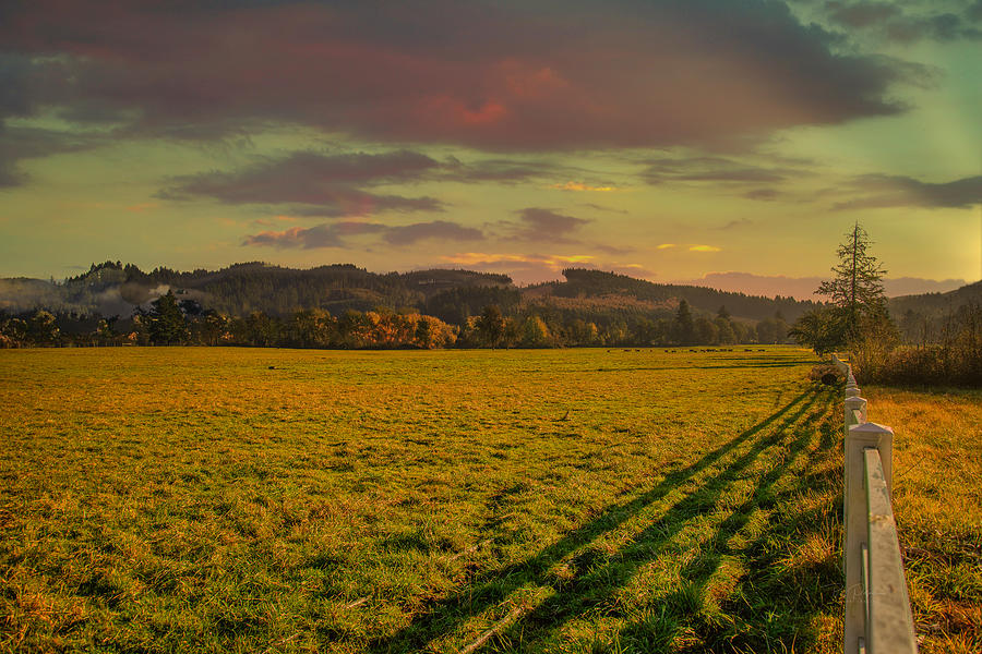 Pasture Land by Bill Posner