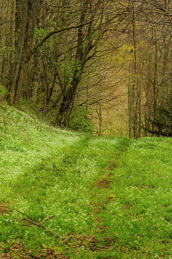 Blue Ridge Mountains Photograph - Path Less Traveled by Melissa Southern