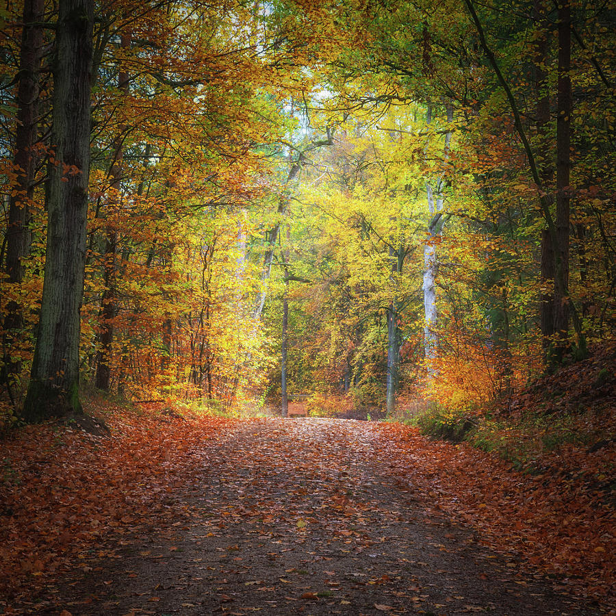 Path Through The Autumn Photograph