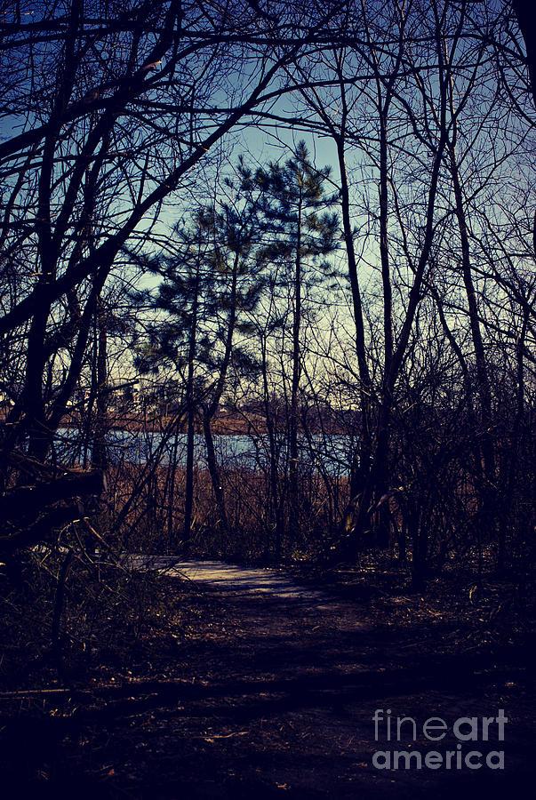 Path To Prairie Lake Photograph