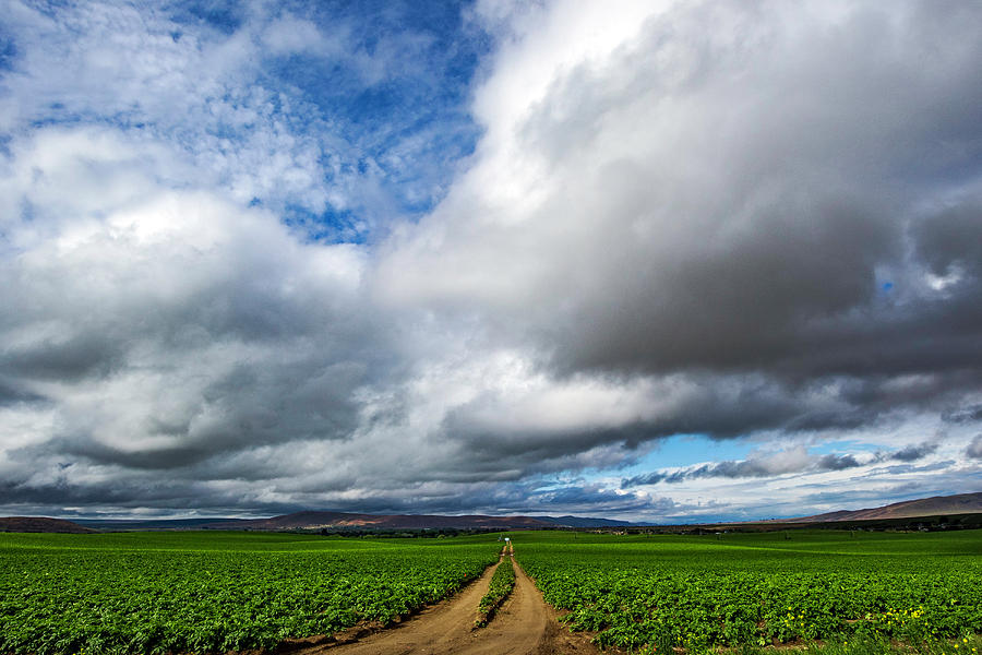 Path under the Clouds by Harold Carlson