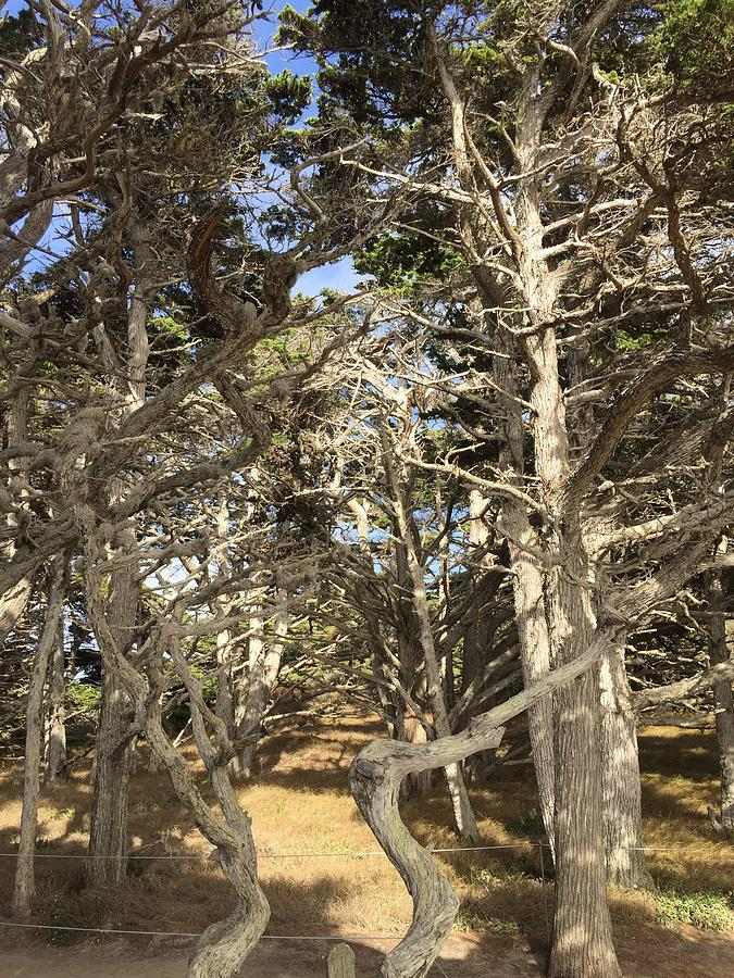 Pathway Through The Trees Point Lobos Photograph