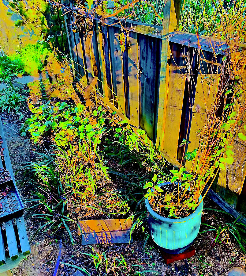 Pattys Fence Photograph