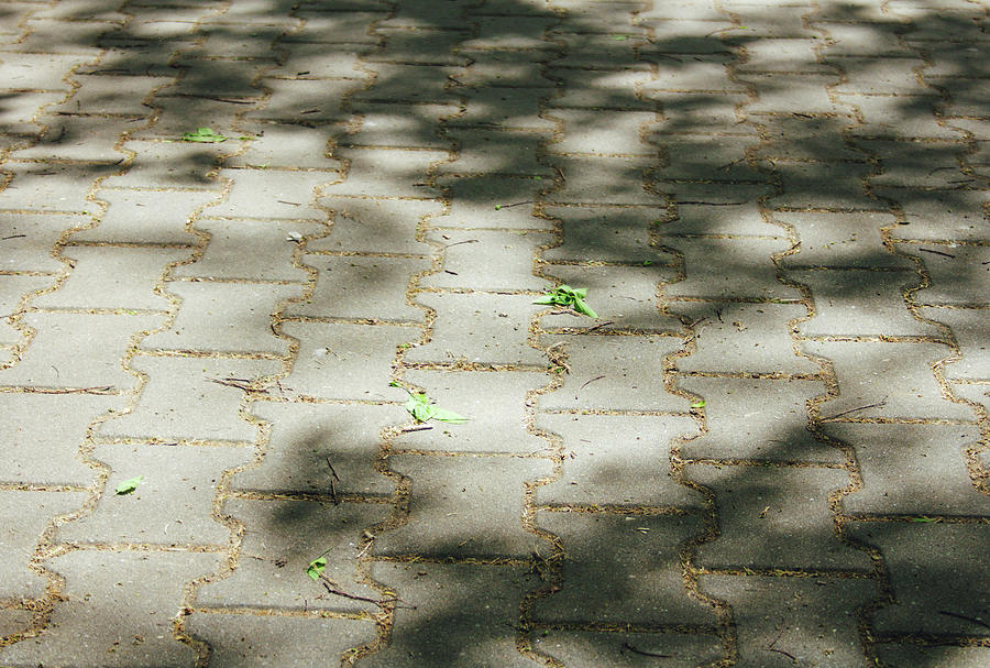 Pavement, Shadow And Light Play Photograph