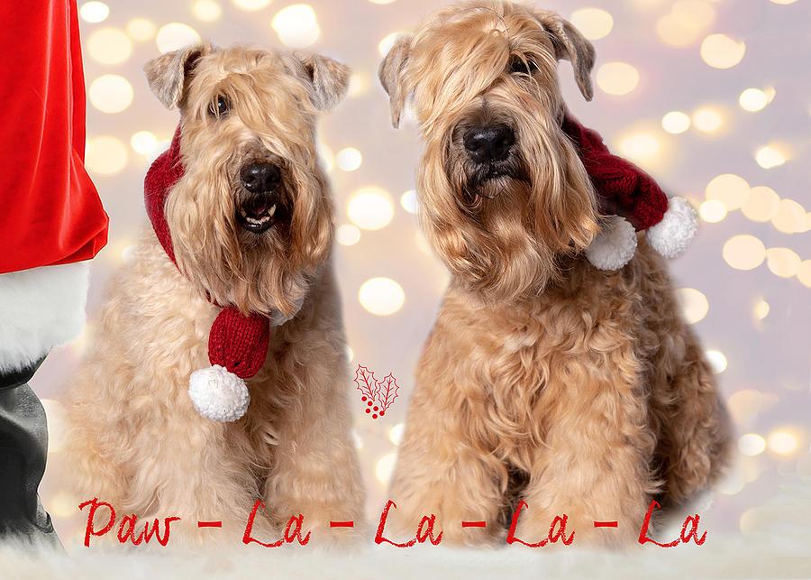 Paw La La with Santa by Rebecca Cozart