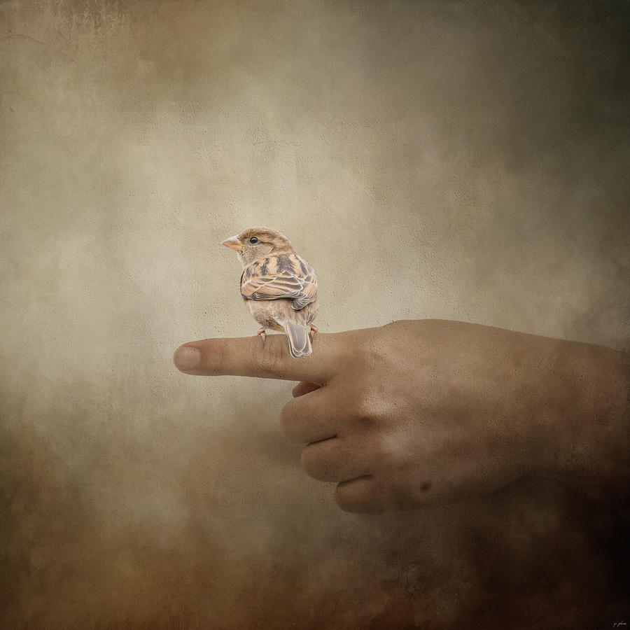 Peace House Finch A Bird In The Hand by Jai Johnson